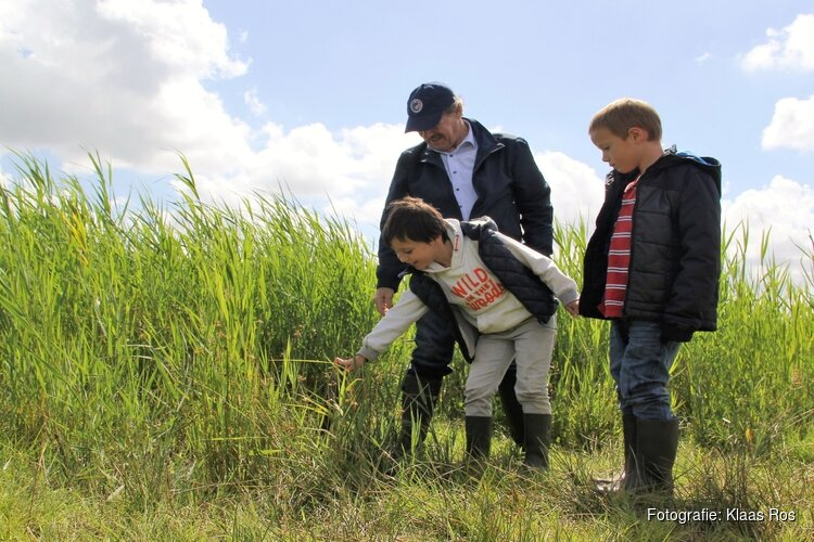 Met de fluisterboot op zoek naar eetbare planten in de Eilandspolder