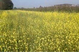 Bijzonder initiatief biodiversiteit: Bloemenzaadmengsel N508 Oterleek