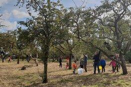 Appels plukken in Eilandspolder