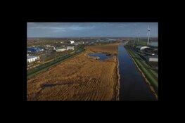 Nieuwe rietlanden in omgeving Alkmaar van enorme natuurwaarde